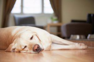 dog-sleeping-on-floor
